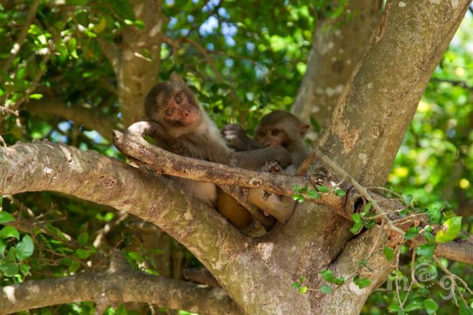 Экскурсионные возможности курорта разнообразны и интересны: Чамские башни Понагар, пагода Лонг Шон, Остров обезьян, красивейшие водопады и многое другое.