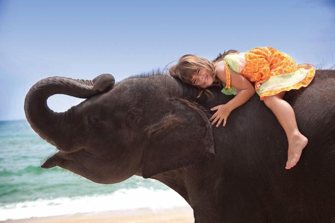 Слон - один из символов королевства Таиланд!
