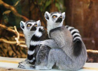 animals-1010643_1280