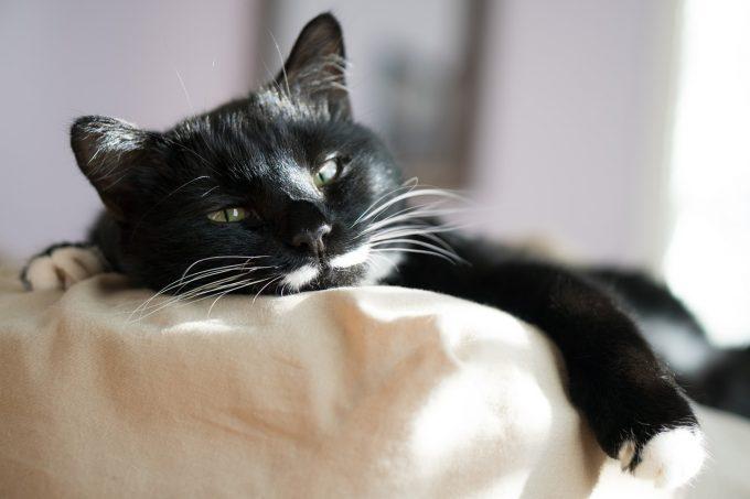 cat-3430571_1280